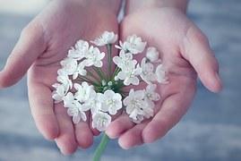 flower-1283259__180